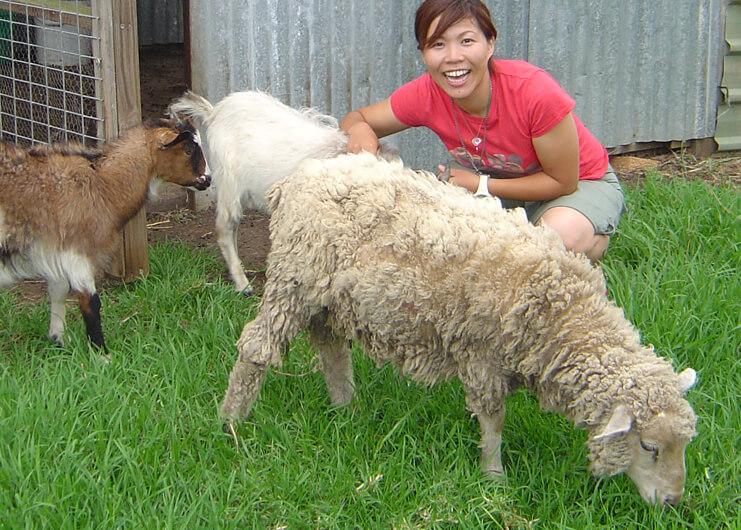 動物保護施設で飼育スタッフ体験